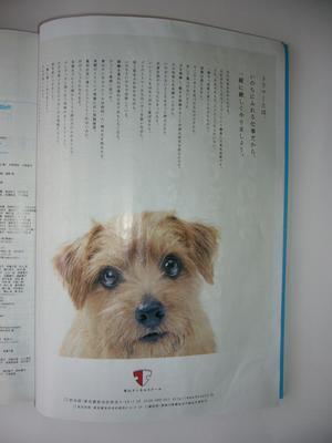 DINO部長 広告.JPG